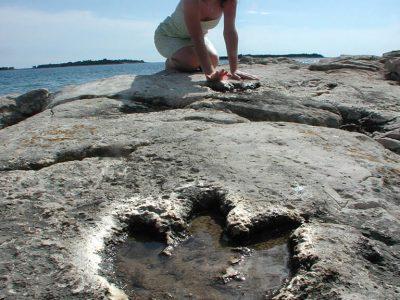 Pula dinosaur footsteps