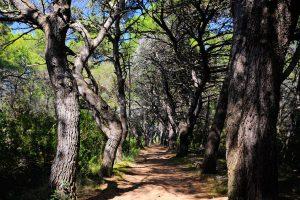 Dugi otok forest