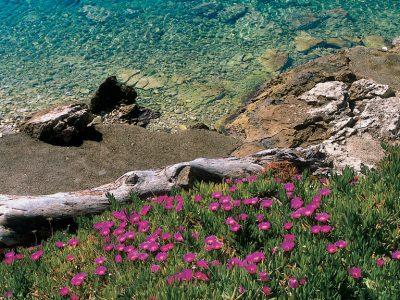 Mljet nature sea