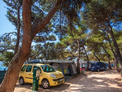 Camping Rapoca pitches in pine forest